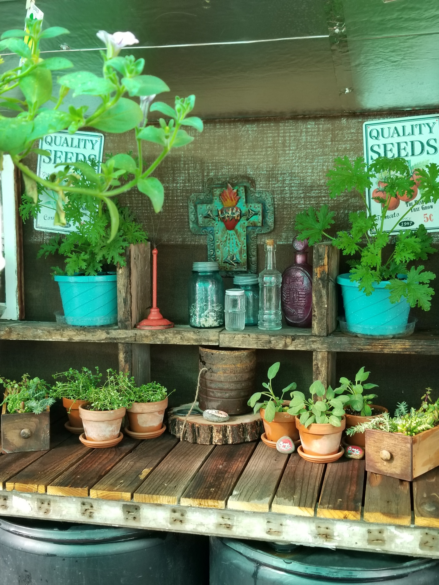 Read more about the article The Green House